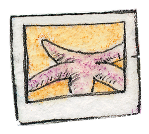 starfish_drawing